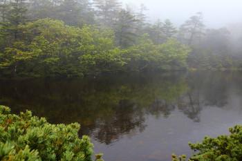 新緑の七ツ池 Photo by Kenji Shimadate