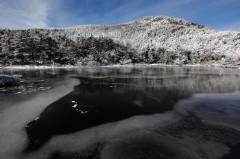 結氷の七ツ池(16日撮影) Photo by Kenji Shimadate