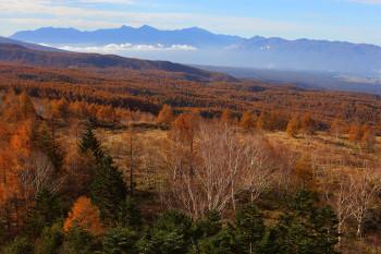 カラマツの黄葉と南アルプス(ロープウェイより10月31日撮影) Photo by Kenji Shimadate