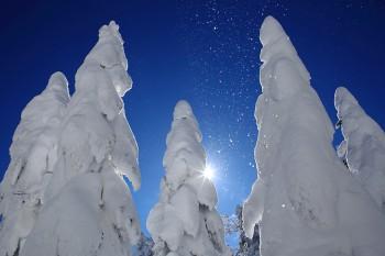 樹氷と舞い落ちる雪 Photo by Kenji Shimadate