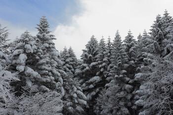 冬の装いとなった樹々(12月24日撮影) Photo by Kenji Shimadate
