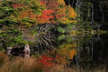 始まった七ツ池の紅葉(9月17日撮影) Photo by Kenji Shimadate
