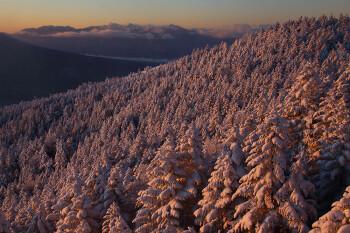 朝陽を受ける樹氷林と南ア(1月5日撮影) Photo by Kenji Shimadate