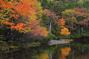 見頃を迎えた七ツ池(10月1日撮影) Photo by Kenji Shimadate 北八ヶ岳 北横岳ヒュッテ