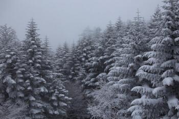 取り戻した雪景色(2月18日撮影) Photo by Kenji Shimadate
