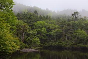 霧降りる七ツ池(7月18日撮影) Photo by Kenji Shimadate