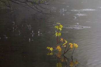 雨垂れの水面 Photo by Kenji Shimadate