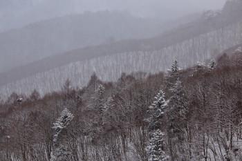 山麓の雪景色(24日撮影) Photo by Kenji Shimadate