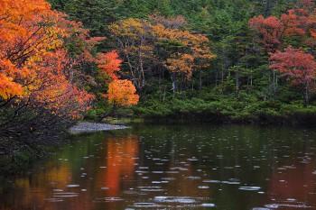 雨の七ツ池(9月27日撮影) Photo by Kenji Shimadate