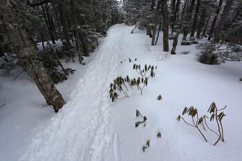 樹林内の登山道の様子(三ツ岳分岐付近、4月5日撮影) Photo by Kenji Shimadate