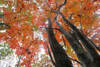 山麓駅付近の紅葉(10月13日撮影) Photo by Kenji Shimadate