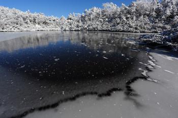 全面結氷の七ツ池(11月17日撮影) Photo by Kenji Shimadate