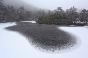 薄雪積もる七ツ池(11月22日撮影) Photo by Kenji Shimadate