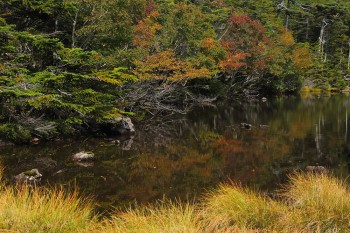 紅葉始まる七ツ池(9月16日撮影) Photo by Kenji Shimadate