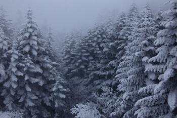 白い森(2月17日撮影) Photo by Kenji Shimadate