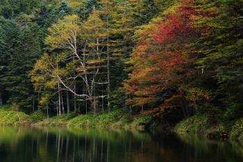 双子池雌池(10月4日撮影) Photo by Kenji Shimadate