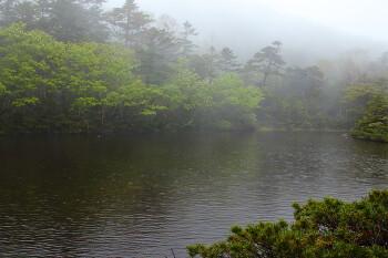 新緑始まる七ツ池(6月22日撮影) Photo by Kenji Shimadate