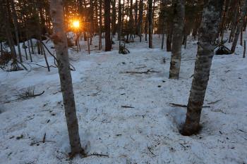 朝陽と残雪の林下 Photo by Kenji Shimadate