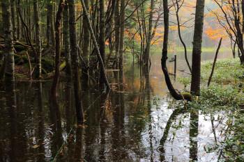 亀甲池の水没した登山道(10月14日撮影) Photo by Kenji Shimadate