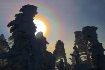 樹氷と光環(11月29日撮影) Photo by Kenji Shimadate