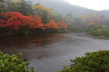 雨の七ツ池(9月25日撮影) Photo by Kenji Shimadate