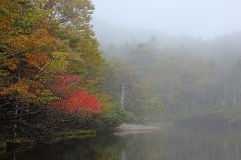 紅葉始まる七ツ池(9月24日撮影) Photo by Kenji Shimadate