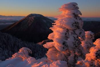 夕映えの樹氷(12月19日撮影) Photo by Kenji Shimadate