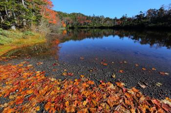 落ち葉の七ツ池 Photo by Kenji Shimadate