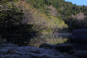 新緑と霜降る七ツ池(6月14日撮影) Photo by Kenji Shimadate