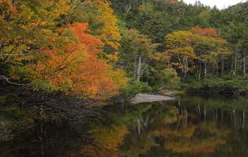 色付き進む七ツ池(9月20日撮影) Photo by Kenji Shimadate