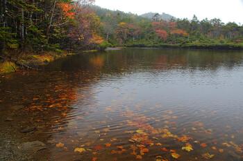 紅葉終盤の七ツ池(10月8日撮影) Photo by Kenji Shimadate