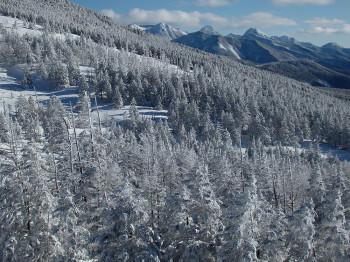 樹氷林と八ヶ岳(山頂駅より25日撮影) Photo by Kenji Shimadate
